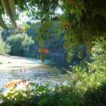 Praia fluvial Troviscal