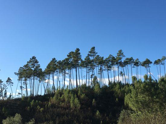 Bomenrij-1