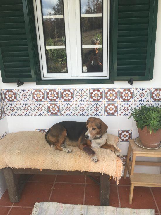 Vale de garcia voor bank met hond