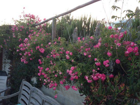 Vale bloemen op de bakplaat 1
